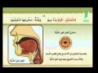 الإتقان لتلاوة القرآن  مخرج طرف اللسان-مخرج الشفتین-مخرج الخیشوم