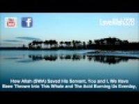 O'Muslims Blame Yourselves - by Sheikh Khalid Yasin [HD]