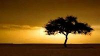 Yasir Qadhi -- The Mahdi Between Fact and Fiction 18/24
