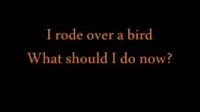I rode over a bird.What should i do now?