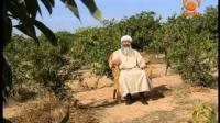 Even Animals Glorify Allah, Muhammad PBUH Messenger of Allah - Sheikh Hassan Zabadi
